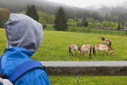…oder beim Blick ins Tier-Freigelände! (Foto: Simone Stiedl)