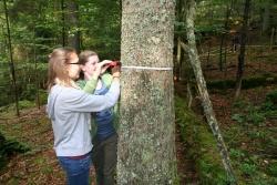 Wie dick ist dieser Baum? 10.-Klässler des Gymnasiums Zwiesel bei der Erfassung von Waldstrukturen im Nationalpark.