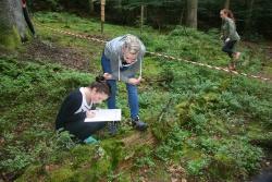 Schüler der 10. Jahrgangsstufe des Gymnasiums Zwiesel bei der Untersuchung von Totholz im Nationalpark.