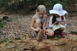 Der Nationalparkwald birgt viele Geheimnisse – beim Pfingstferienprogramm werden sie erforscht vielleicht ja auch gelüftet. (Foto: NPV Bayerischer Wald)