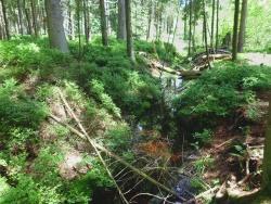 """Das Moor """"Kleine Au"""" bei Altschönau ist durch tiefe Entwässerungsgräben und Aufforstungen stark beeinträchtigt. Im Rahmen der Renaturierungsarbeiten werden die Gräben mit Hilfe von Dämmen unwirksam gemacht und somit der Wasserhaushalt verbessert. (Foto: NPV)"""